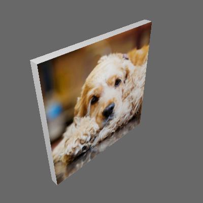 Quadro Cachorro Cocker Uniart Marrom 45x45 cm - Uniart